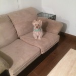 south-san-francisco-Sofa-Pet-Stain-Cleaning